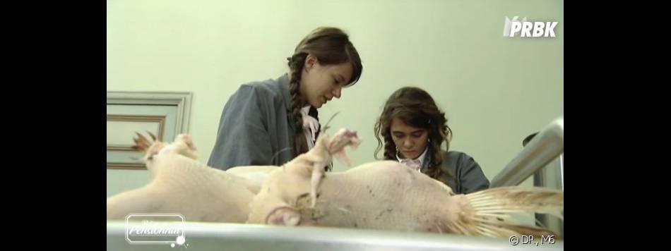 Retour au Pensionnat à la campagne : les élèves s'occupent des poules.