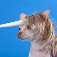 [PHOTOS] Les 25 déguisements d'animaux les plus ridicules de tous les temps