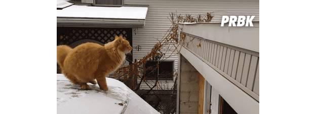 cat jump fail