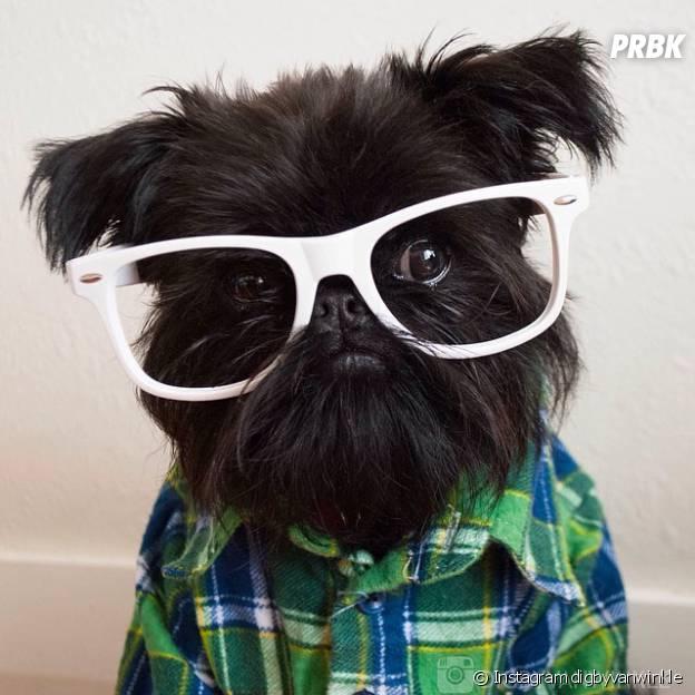 Digby & Aloysius Van Winkle : les chiens les plus cools d'Instagram