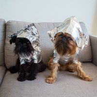 Digby et Alo Van Winkle : les 2 chiens hipsters stars d'Instagram