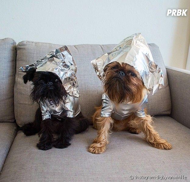 Digby & Aloysius Van Winkle : les chiens les plus cool d'Instagram