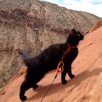 Millie : le chat pro de l'escalade et de la randonnée qui fascine Instagram