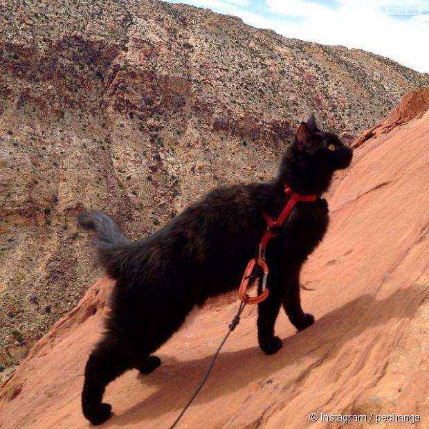ébène noir chatte pic
