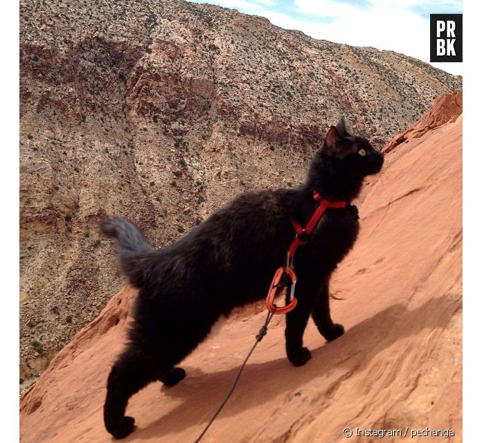 noir ébène chatte photos