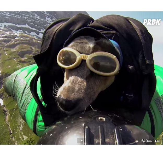 Whisper, le premier chien fan de base jump sur le dos de son maître Dean Potter