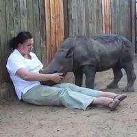 Ce bébé rhinocéros pleure la mort de sa mère dans les bras de ses sauveurs