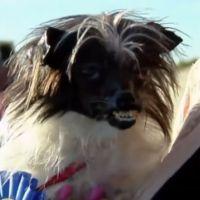 [INSOLITE] Découvrez Peanut, le chien le plus moche du monde