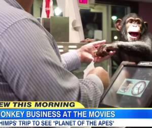 La Planète des singes, l'affrontement : un film qui passionne... les singes