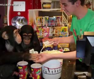 La Planète des singes, l'affrontement : des spectateurs très spéciaux