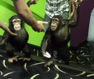 La Planète des singes, l'affrontement : les singes aiment le film