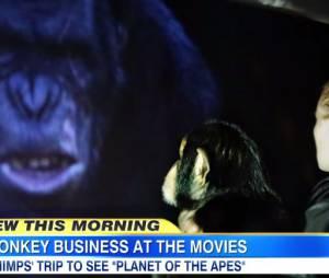 La Planète des singes, l'affrontement : un film qui passionne tout le monde