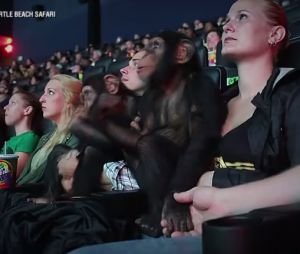 La Planète des singes, l'affrontement : deux chimpanzés assistent à la projection du film