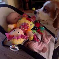 [CUTE] Un chien vole un jouet à un bébé et se fait pardonner
