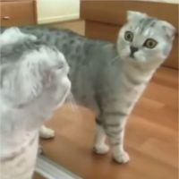 Un chat terrorisé par... son propre reflet dans le miroir