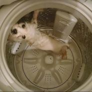 Il met son chien dans une machine à laver et publie des photos sur Facebook