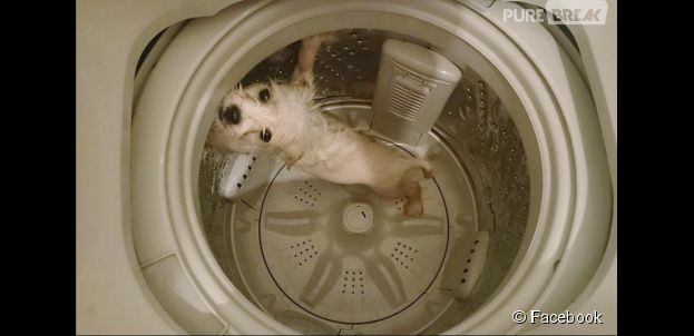 A Honk Kong, un internaute poste sur Facebook les photos de son chien dans une machine à laver