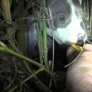 Quand le sauvetage d'un chien abandonné peut en cacher trois autres