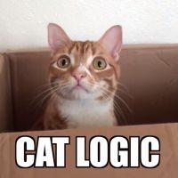 Les chats ont une logique incompréhensible : en voici la preuve
