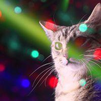 Meow mix songs : la chanson avec des chats et pour les chats