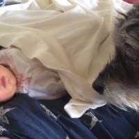 Ce chien qui prend soin d'un bébé endormi va vous faire fondre