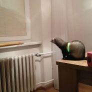 Fail : découvrez le saut complètement raté de ce furet d'appartement