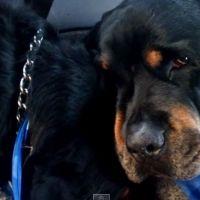 Après la mort de son frère, ce chien reste à ses côtés pour le pleurer et le câliner