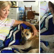 Le chien le plus brave : perdu par sa famille, il parcourt 58 km en 9 jours pour la retrouver