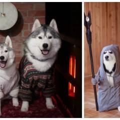 Ces Husky habillés avec des vêtements humain sont beaucoup trop mignons !