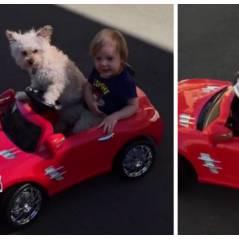 Ce chien et ce petit garçon qui conduisent sont beaucoup trop MIGNONS !
