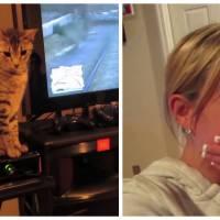 Fatiguée de le regarder jouer, elle éteint la console de son mec... grâce à son chat !