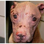 Sauvée l'été dernier, cette chienne était torturée à l'acide. Pour Noël, elle a été adoptée