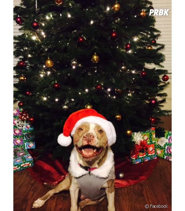 Rosie la chienne dans sa nouvelle famille en décembre 2015